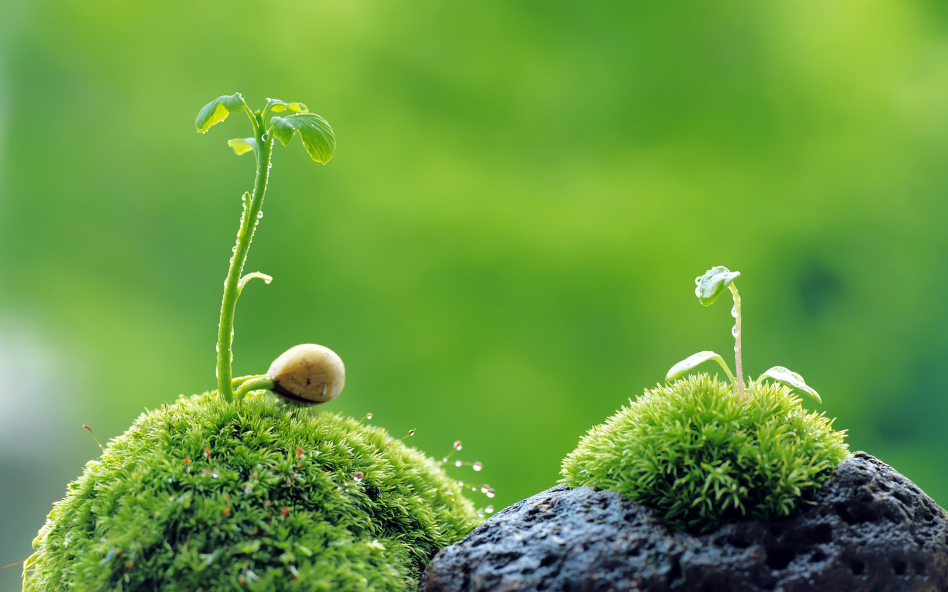 Free Nature Wallpaper Download For Laptop